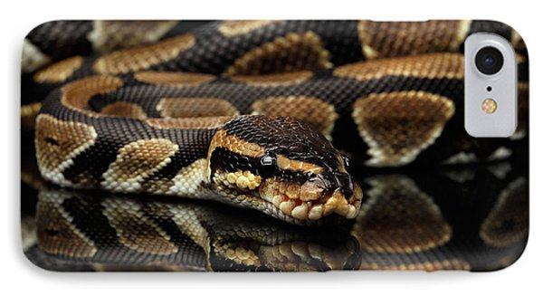 Ball Or Royal Python Snake On Isolated Black Background IPhone 7 Case by Sergey Taran