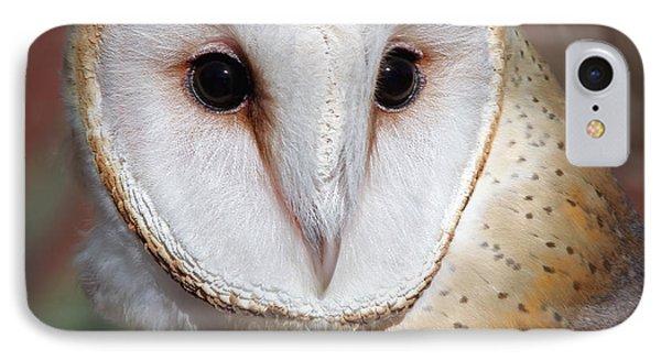 Barn Owl IPhone Case by Elaine Malott