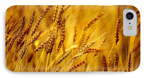 Bearded Barley IPhone Case by Todd Klassy