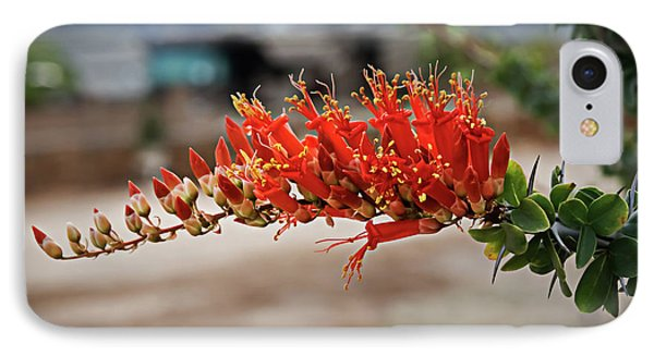IPhone Case featuring the photograph Beautiful Ocotillo by Robert Bales