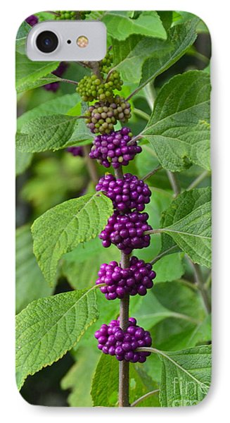 Beautyberry IPhone Case by Carol  Bradley