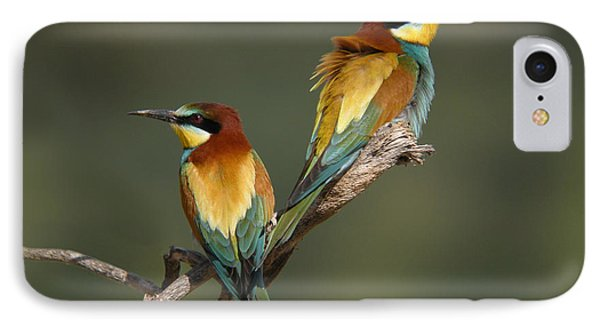 Bee-eater IPhone Case by Perry Van Munster