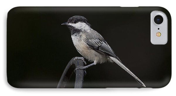Black-capped Chickadee IPhone Case