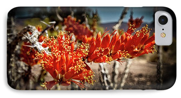 Blooming Ocotillo IPhone Case by Robert Bales
