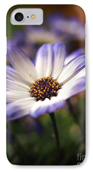 Blue Bi-color Pericallis Senetti  IPhone Case by Dorothy Lee