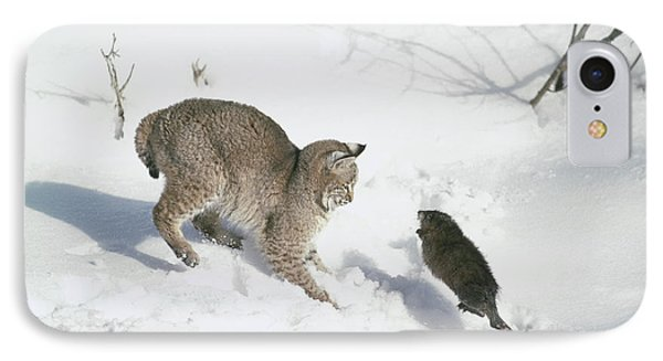 Bobcat Lynx Rufus Hunting Muskrat IPhone Case by Michael Quinton