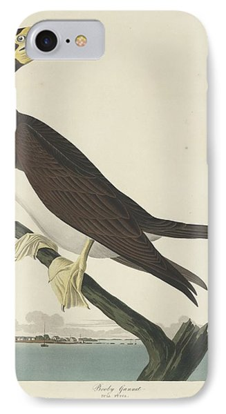 Boobies iPhone 7 Case - Booby Gannet by Dreyer Wildlife Print Collections