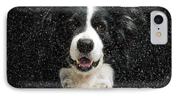 Border Collie IPhone Case by Nichola Denny