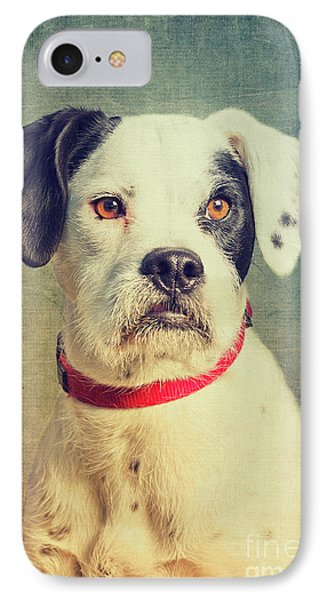 Boxer-schnautzer-mix IPhone Case by Angela Doelling AD DESIGN Photo and PhotoArt