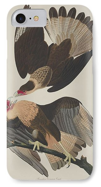 Brasilian Caracara Eagle IPhone Case