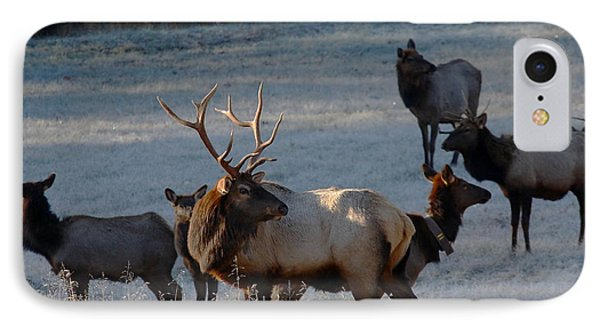 IPhone Case featuring the photograph Bull Elk In Frost  by Michael Dougherty