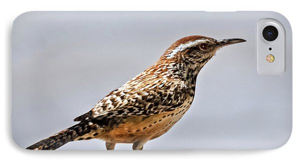 IPhone Case featuring the photograph Cactus Wren by Robert Bales