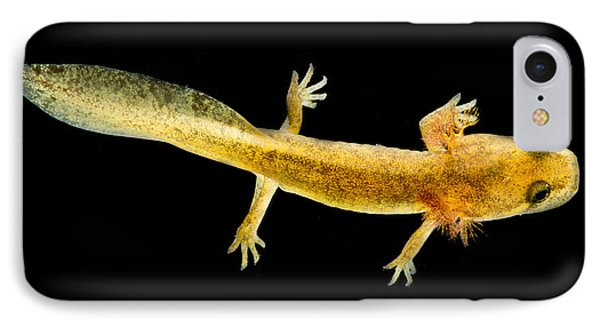 California Giant Salamander Larva IPhone 7 Case by Dant� Fenolio