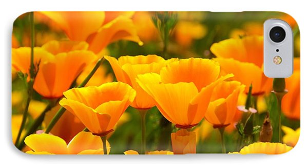 California Poppies IPhone Case by Patrick Witz