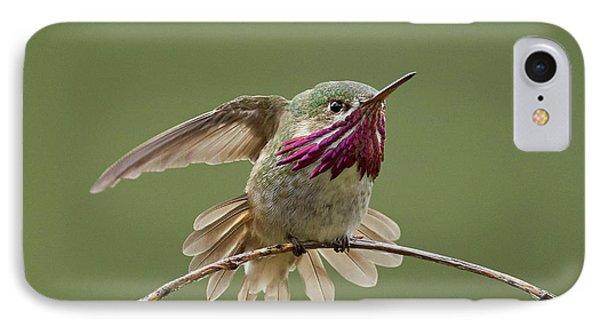 Calliope Hummingbird IPhone Case by Doug Herr