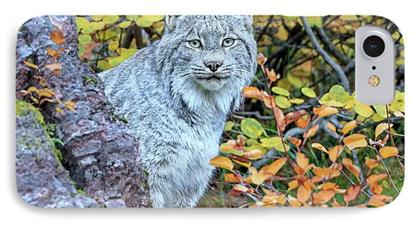Canada Lynx IPhone Case by Jack Bell