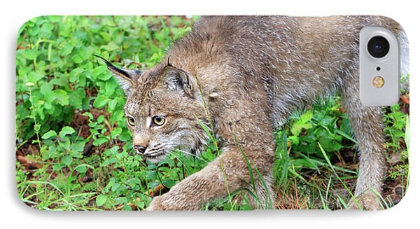 Canada Lynx Lynx Canadensis Phone Case by Louise Heusinkveld