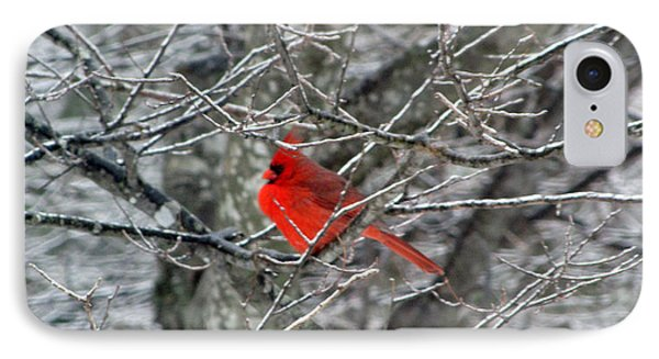 Cardinal On Icy Branches IPhone Case by Amy Tyler