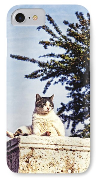 cats of Ephesus IPhone Case