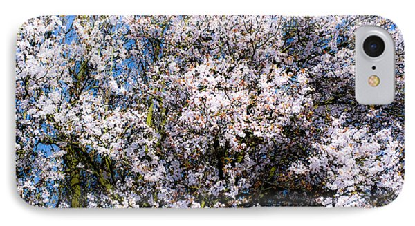 Cherry Blossom Tree Phone Case by Svetlana Sewell