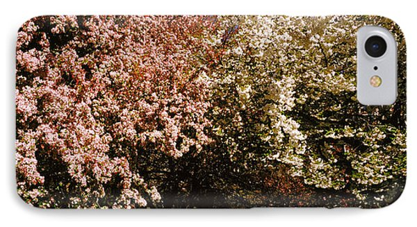 Cherry Blossoms In A Park, Riverside IPhone Case by Panoramic Images