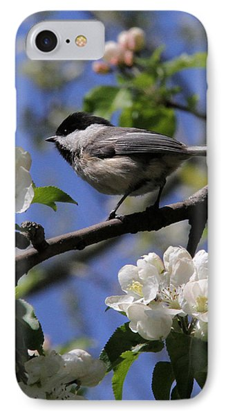 Chickadee Among The Blossoms IPhone Case by Doris Potter
