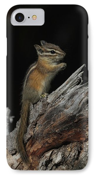 IPhone Case featuring the photograph Chipmunk by Angie Vogel