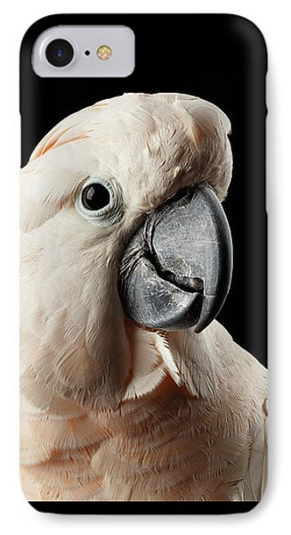 Closeup Head Of Beautiful Moluccan Cockatoo, Pink Salmon-crested Parrot Isolated On Black Background IPhone Case