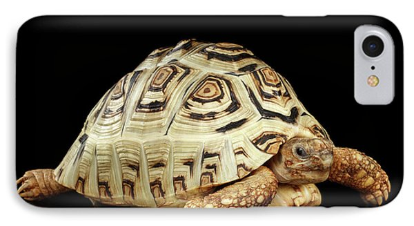 Closeup Leopard Tortoise Albino,stigmochelys Pardalis Turtle With White Shell On Isolated Black Back IPhone 7 Case by Sergey Taran