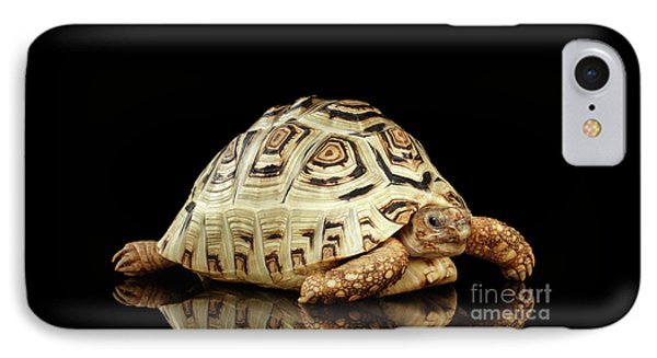 Closeup Leopard Tortoise Albino,stigmochelys Pardalis Turtle With White Shell On Isolated Black Back IPhone Case by Sergey Taran