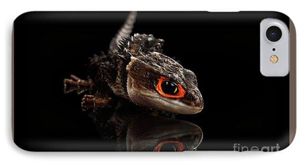 Closeup Red-eyed Crocodile Skink, Tribolonotus Gracilis, Isolated On Black Background IPhone 7 Case by Sergey Taran