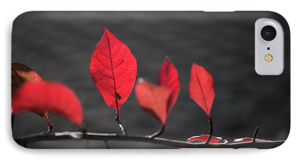 Colorful Tree Leaves Changing Color For Auyumn,fall Season In Oc IPhone Case by Jingjits Photography