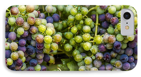 Colorful Wine Grapes On Grapevine IPhone Case by Teri Virbickis