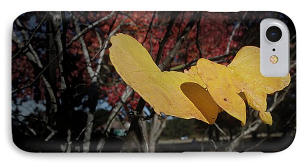 IPhone Case featuring the photograph Colors Of Fall by Joseph G Holland