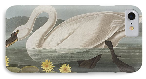 Common American Swan IPhone Case by John James Audubon