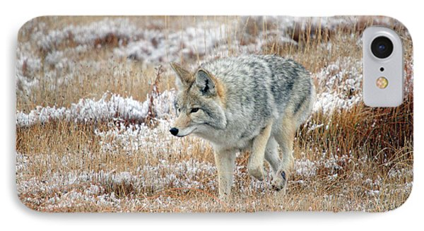 Coyote  In Yellowstone National Park Phone Case by Pierre Leclerc Photography