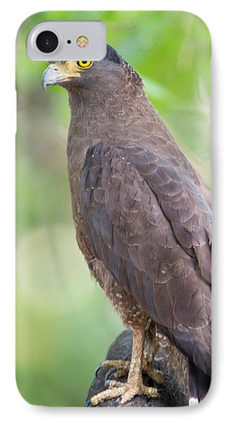 Crested Serpent Eagle Spilornis Cheela IPhone Case by Panoramic Images