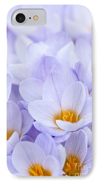 Crocus Flowers IPhone Case by Elena Elisseeva