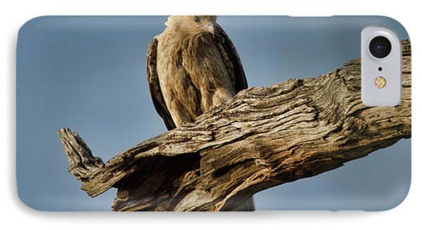 IPhone Case featuring the photograph Curious by Douglas Barnard