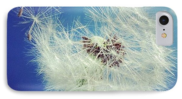 Dandelion And Blue Sky IPhone Case by Matthias Hauser