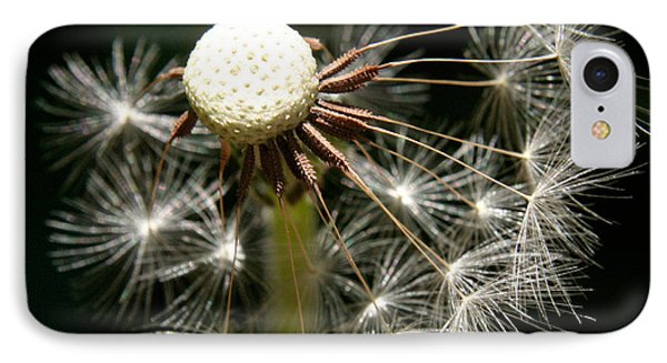 Dandelion IPhone Case by Ralph A  Ledergerber-Photography