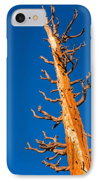 Dead Tree IPhone Case by Celso Diniz