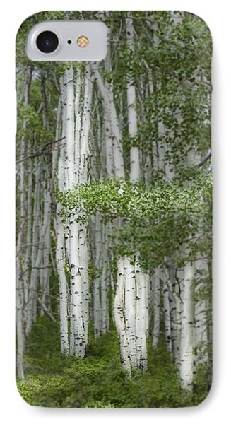 Delicate Aspens. Colorado IPhone Case