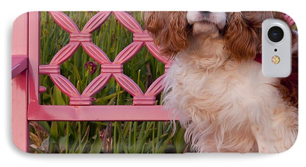 Dog On Pink Bench Photograph By Mandy Judson