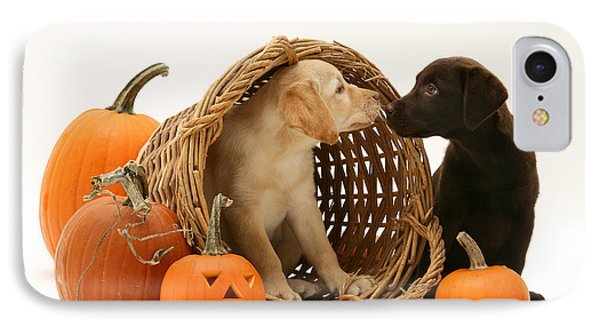 Dogs In Basket With Pumpkins IPhone Case