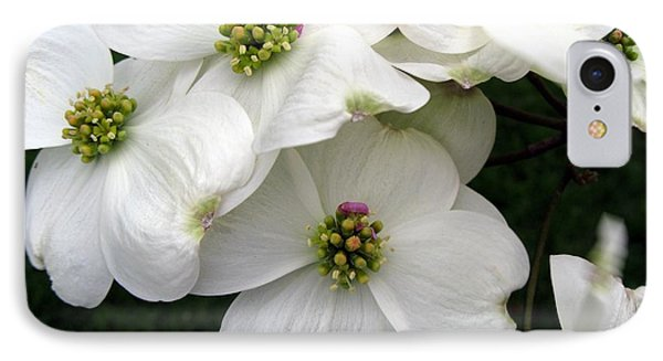 Dogwood Branch IPhone Case by Carol Sweetwood