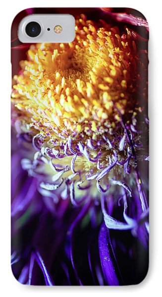 Dying Purple Chrysanthemum Flower Background IPhone Case by John Williams