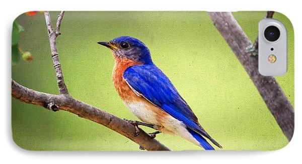 Eastern Bluebird Phone Case by Al  Mueller