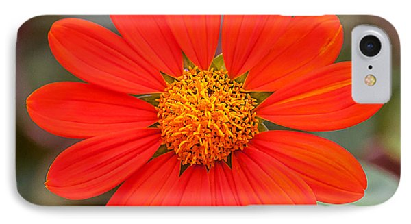 IPhone Case featuring the photograph Fall Flower by Edward Peterson