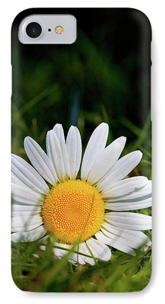 IPhone Case featuring the photograph Fallen Daisy by Scott Holmes